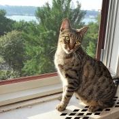 Cat Mélia with a river view