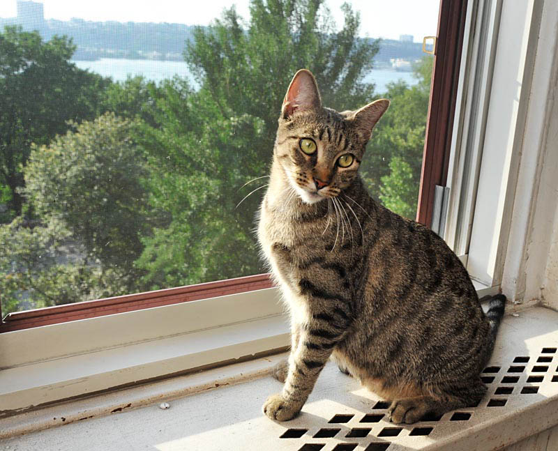 Cat Mélia with a river view
